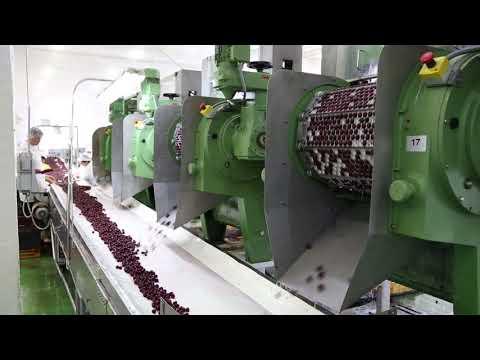 Fruit pitting machine   cherry pitting - Tooltechnik